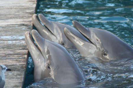 dolphins Stok Fotoğraf
