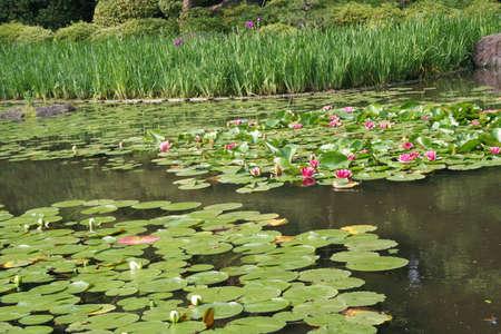 Giappone, Kyoto, Heian Garden  Archivio Fotografico - 7375029