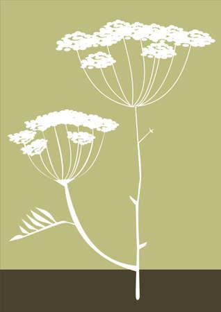 fennel: Hierbas silueta de fondo de vectores Vectores