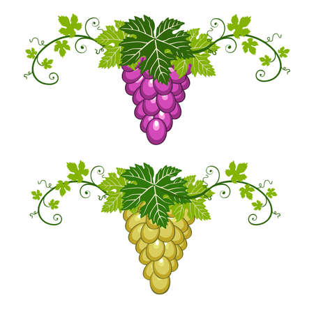 Blue and yellow grapes with green leaves on white background. Two borders, decorative object for your design.