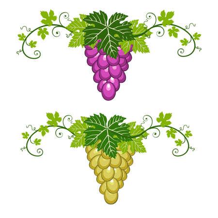 neocl�sico: Uvas azules y amarillos con hojas de color verde sobre fondo blanco. Dos fronteras, objeto de decoraci�n para su dise�o.