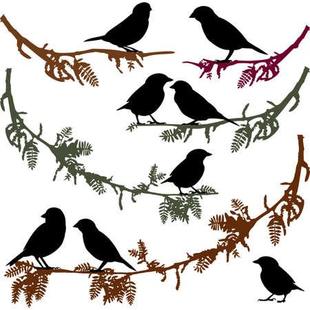birds  silhouette: Birds on branch tree vector illustration Illustration