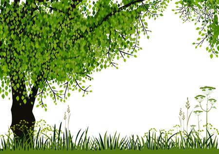 sfondo natura: Natura sfondo Vettoriali
