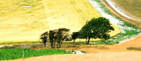 tortillera: Diablos dique 2