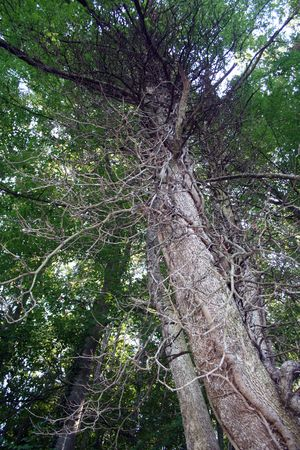 Unusual tree in forest