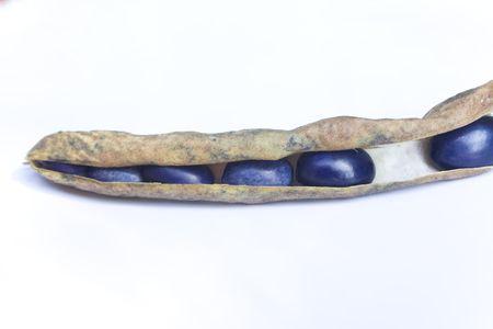 peel of bean Stock Photo