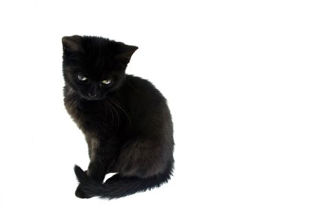 Little black cat Stock Photo - 8052661