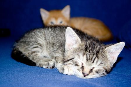 Sleeping little cat Stock Photo