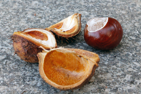 Chestnut fall with shell