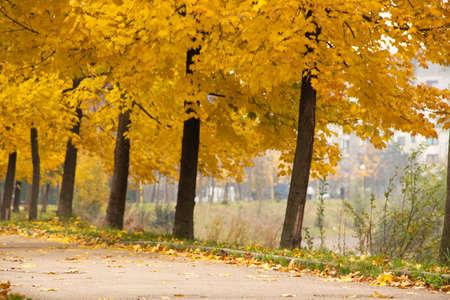 Autumn trees by sidewalk Stock Photo
