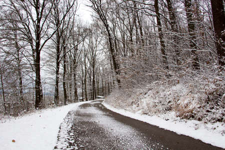 Forest road by lake in winter