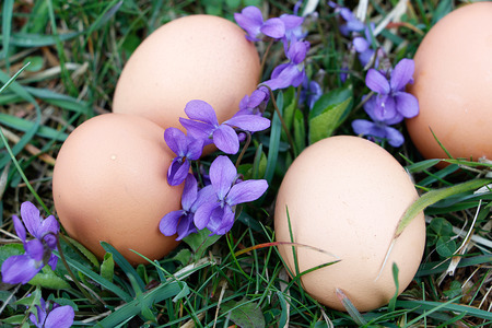 Eggs on ground with viola flower around Stock Photo
