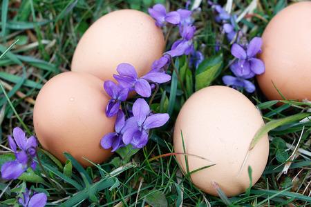 Eggs on ground with viola flower around Stock Photo