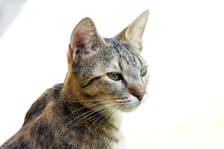 Little cat stares at something Stock Photo