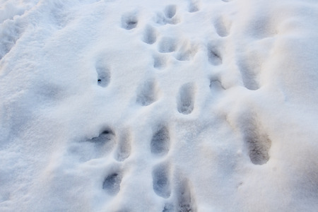 Cat trace in snow Stock Photo