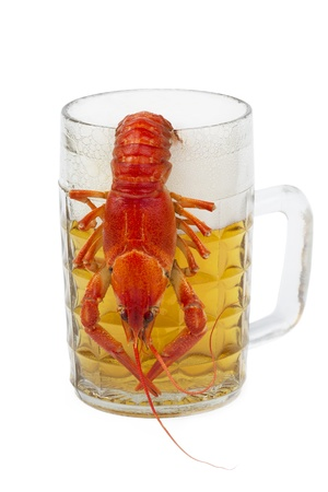 crawfish hanging on a mug of beer, isolated on white Stock Photo - 10242706