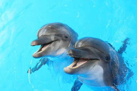Two dolphins swim in the pool Stock Photo - 10242722