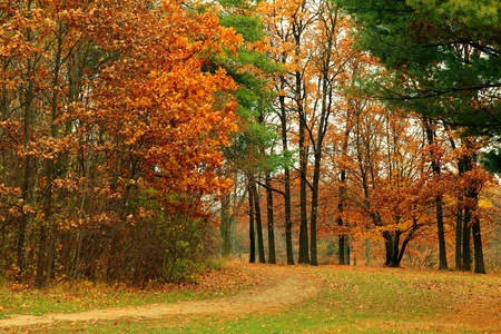 Background bright autumnal landscape of the park on a cloudy day Stock Photo - 10323898