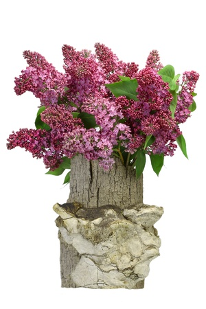 fresh lilacs in the original wooden vase, isolation photo