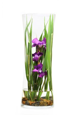 Flowers in a Glass Vase photo