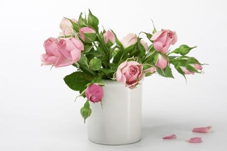 florero: rosas en un florero peque�o aislado sobre fondo blanco