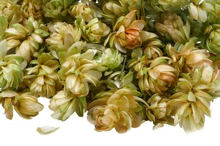 Dried flowers are yellow, and green plants hops, close-up photo