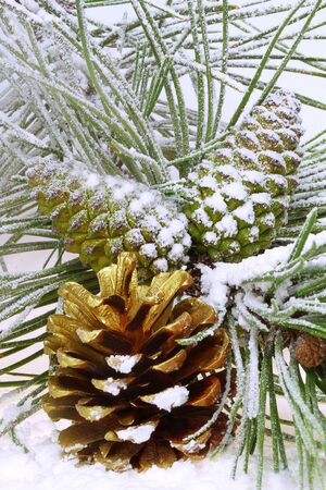 Pine branch with cones in the snow photo