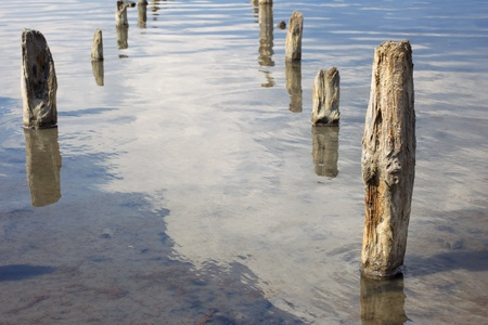 The old wooden pillars in the water salty Dead Sea. Crustaceans - Artemia in the clear water.  photo