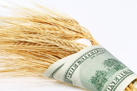 Spikes of wheat wrapped in dollars on a light background photo