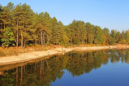 River landscape in autumn pine forest, early morning on a sunny day Stock Photo - 10744388