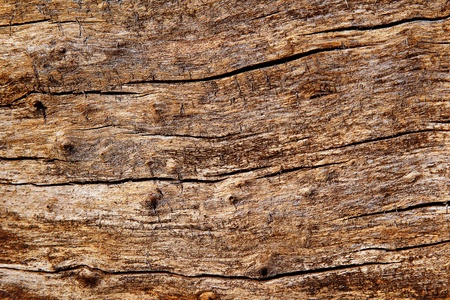 surface texture of the old rotten wood