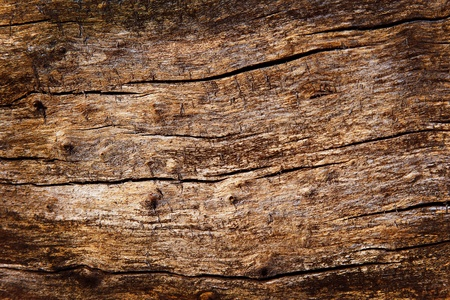 surface texture of the old rotten wood Stock Photo - 11064385