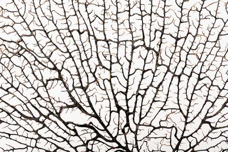 corales marinos: Silueta de color marr�n rama de coral, la textura sobre un fondo blanco