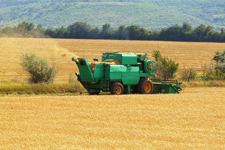 Harvester in a field harvesting wheat summer day photo