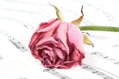 wilted rose flower on the music paper (small DOF) photo