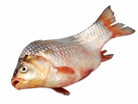 live carp close up isolated on light background photo