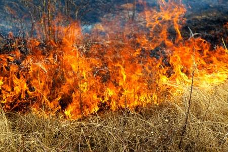 乾いた草の森林、春の日、強い風で燃えています。
