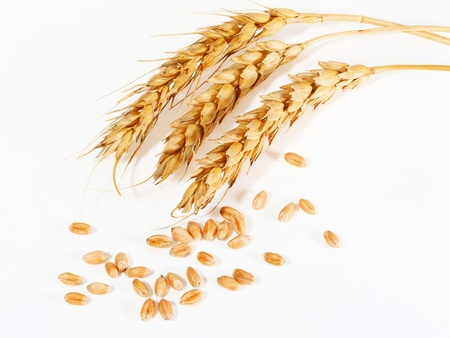 spikelets and grains of wheat on a white background photo