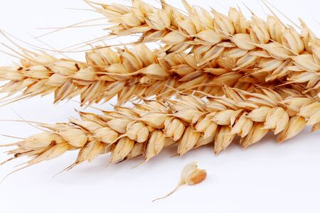 thresh: Ripe ears and Wheat grain on a white background Stock Photo