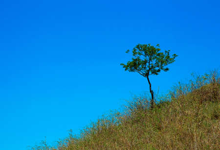 A tree grows on the mountain in the dry grass on a background of blue sky photo
