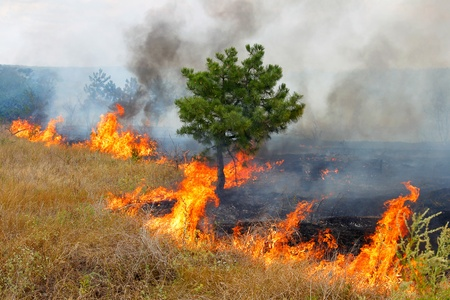 Fire in the woods on a hot summer day  Drought in Ukraine   Stock Photo