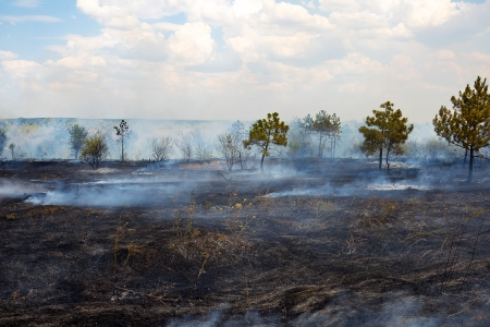 Burnt surface of the earth after a forest fire. Ukraine. Stock Photo