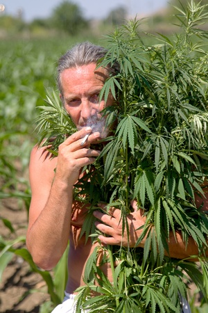 Tanned man smokes a cigarette in the marijuana branches. On the street, summer, sunny day. Stock Photo