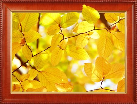 Bright yellow autumn leaves in the frame Stock Photo - 16458818