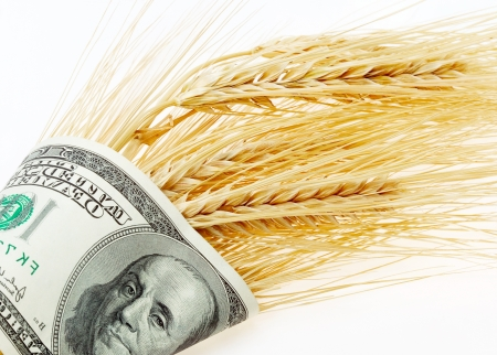 cash crop: Wheat and dollar banknote in close up Stock Photo