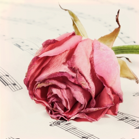 grunge background with rose and music notes. Vintage photo