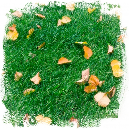 uneven edge: Abstract background of green grass and autumn leaves