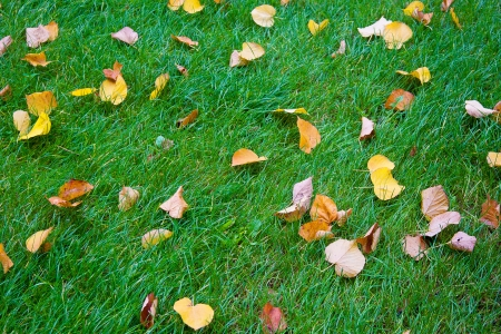 Abstract background of green grass and autumn leaves Stock Photo - 17344722