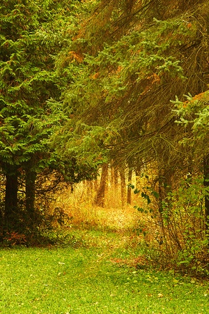 Trees growing in the wood in autumn time of year Stock Photo - 18722863