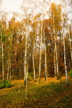 Trees growing in the wood in autumn time of year Stock Photo - 18722866